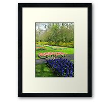 Colourful Beds of Hyacinths and Tulips - Keukenhof Gardens Framed Print
