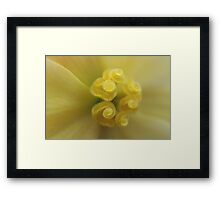 Begonia Macro Framed Print