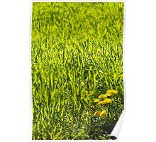Fresh Green Poster