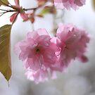 Pretty in pink by Sandra Johansson