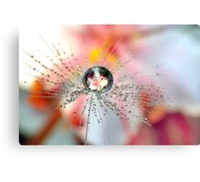 Dandelion Flower Drop Canvas Print