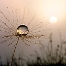 Dandelion Sunrise by Gazart