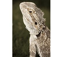 Bearded Dragon Photographic Print