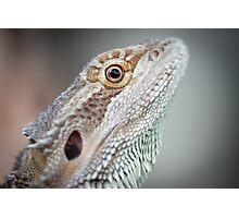 Portrait of a Dragon Photographic Print