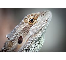 Portrait of a Dragon Photographic Print