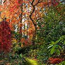 An Autumn Spectrum by annibels