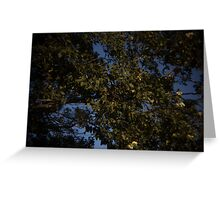 Tree foliage Greeting Card
