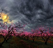 Its Peach Time by Charles & Patricia   Harkins ~ Picture Oregon