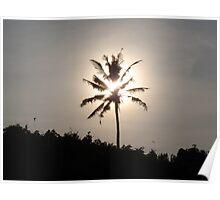 Bali Palm Poster