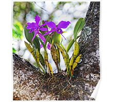 Orchid Growing on a Tree Poster