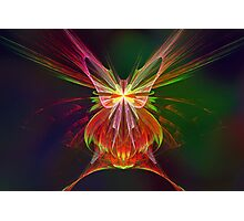 Apophysis Butterfly Photographic Print