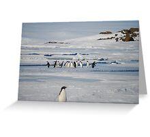 Browning Peninsula Adventure Penguins - Antarctica Greeting Card