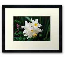 Daffodil flowers Framed Print