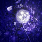 Dandelion at night by Margherita Bientinesi