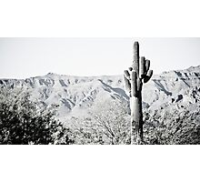 Saguaro Photographic Print