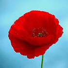 A Perfect Poppy by Rosanne Jordan