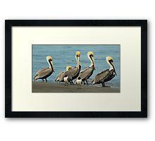 Beach Bird Buddies Framed Print