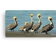 Beach Bird Buddies Canvas Print