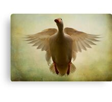Duck Flight Canvas Print