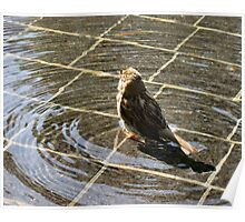 A Sparrow Amid Ripples Poster