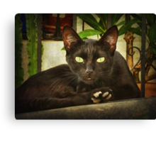 Black cat, green eyes. Canvas Print