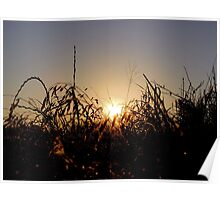 Sunrise over Pecan Grove Park Poster