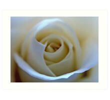 White Rose Flower Art Print