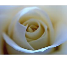 White Rose Flower Photographic Print
