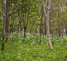 Through the trees.. by Lauren Tucker