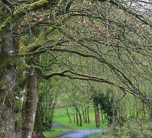 A Walk in Ireland by Erin K Casey