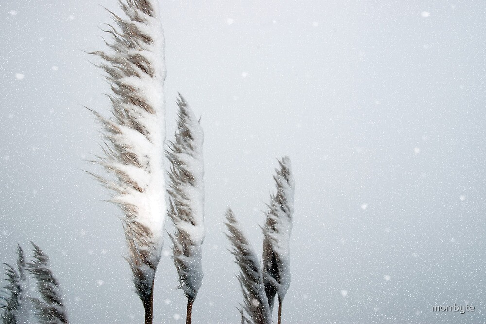 snowy covered rushes by morrbyte