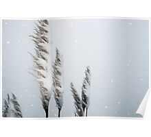 snowy covered rushes Poster