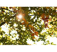 Autumn Sunshine Photographic Print