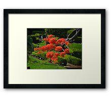 Flamboyant  Framed Print