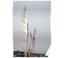 snowy covered rushes and reeds Poster