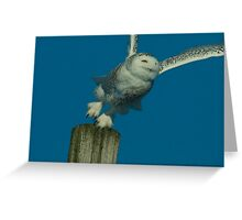 Portrait of Snowy Owl Hunting from a Perch Greeting Card