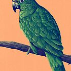 Amazon Parrot by Hannah Marechal