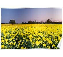 Movement in the rapeseed fields Poster