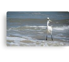 Feathers in the Wind Canvas Print
