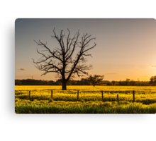 Ruined tree rising above yellow fields Canvas Print