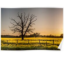 Ruined tree rising above yellow fields Poster