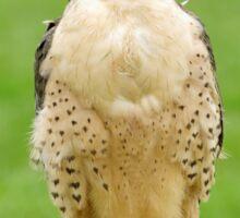 Lanna Falcon (Falco biarmicus) Sticker