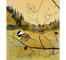 Chickadee In Dancing Pine Photographic Print