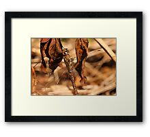 Dragon Browns Framed Print