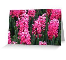 Radiant Rose Pink Hyacinths - Keukenhof Gardens Greeting Card