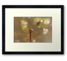 Bokeh Dragon Framed Print