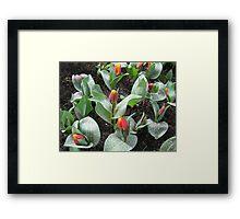 Cheeky Tulips - Keukenhof Gardens Framed Print