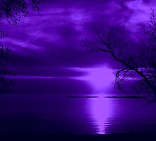 Purple Night by Greta  McLaughlin