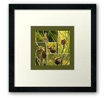 Snail acrobatics in the rapeseed - Storyboard Framed Print