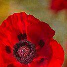 Hot Poppy by Rebecca Cozart